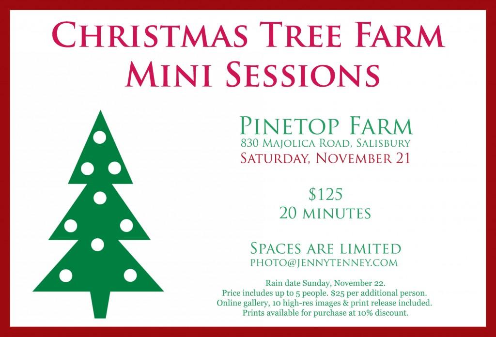 Christmas tree farm mini sessions